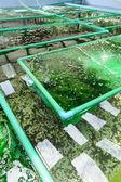 Seaweed farm — Stock Photo
