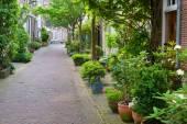 Harlem small street — Foto Stock