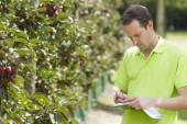 Horticulturist checking his appletrees on his farm — Stockfoto