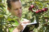 Horticulturist checking his appletrees on his farm — Foto de Stock