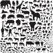 All the animals of Africa — Stock Vector #61047581