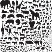 All the animals of Africa — Stock Vector