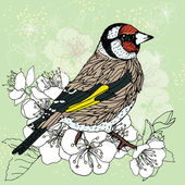 Goldfinch at the cherry blossoms — Stock Vector
