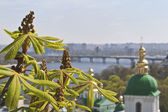 Kind to the chestnut flowers and leaf in the foreground and Kiev Pechersk Lavra, river Dnepr and Kiev in the background. — Stock Photo