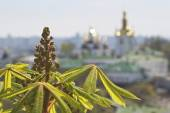 Kind to the chestnut flowers and leaf in the foreground and Kiev Pechersk Lavra in the background. — Stock Photo
