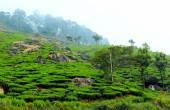 Tea plantation in haze, Kerala, South India — Stock Photo