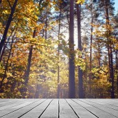 Table in forest — Stockfoto