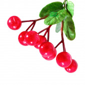 Berries of holly tree — Stock Photo