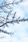 雪中的树 — 图库照片