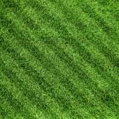 Grass lawn — Stock Photo