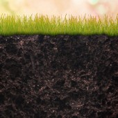 Natural earth with grass  — Stock Photo