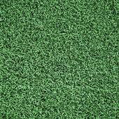 Grass field — Stock Photo