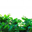 Green leaves of bushes — Stock Photo #68310923