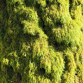 Green Moss on sunny day — Stock Photo