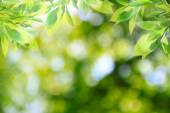 Summer leaves bokeh — Stock Photo