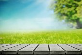 Grass meadow in the park — Stock Photo