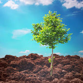 Tree in soil under sky — Stock Photo