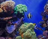 热带鱼和珊瑚礁 — 图库照片