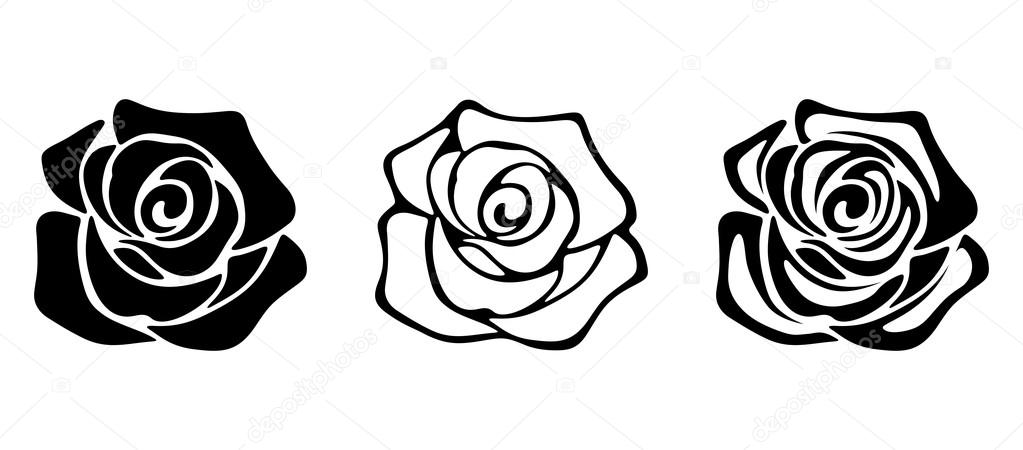 Cool rose vine vector photographs