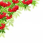 Vector background with rowan branches. — Vettoriale Stock