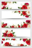 Vector banners with red and white roses. — Stock Vector
