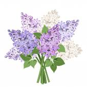 Bouquet of purple and white lilac flowers. Vector illustration. — Stock Vector