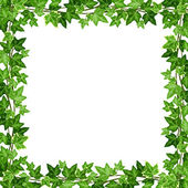 Frame with green ivy leaves. Vector illustration. — Stock Vector