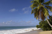France, Martinique, Salines beach in Sainte Anne — Stock Photo