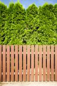 Brown wooden fence and thujas hedge — Stock Photo