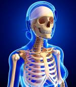 Human skeleton anatomy — Stock Photo