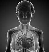 Female x-ray respiratory system artwork — Stockfoto