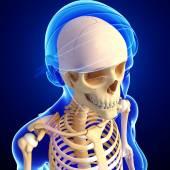Human head skeleton artwork — Fotografia Stock