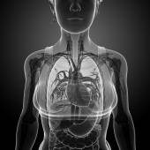 Female x-ray respiratory system artwork — Foto Stock