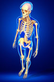Human skeleton side view — Stock Photo