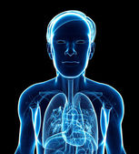Male x-ray respiratory ststem artwork — Stock Photo