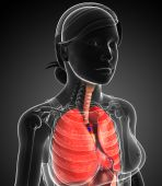 Female respiratory system — Stock Photo