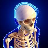 Human head skeleton artwork — Stock Photo