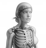 Human body respiratory system — Zdjęcie stockowe