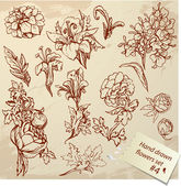 Set of Vintage Realistic graphic flowers - hand drawn images  — Stock Vector