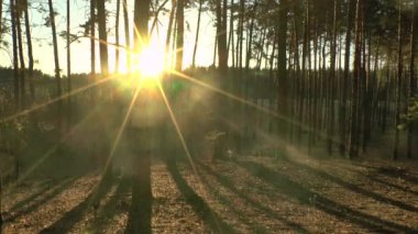 Forest sunset time lapse. — Stock Video