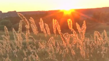 Grass landscape in the wonderful sunset red light — Stock Video