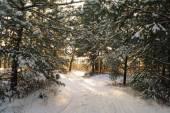 Magic sunrise in the snowy forest — Fotografia Stock