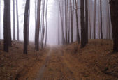 Autumn forest in the morning mist — Stock Photo