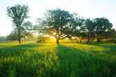 Misty meadow spring at sunrise — Stock Photo
