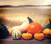 Pumpkins and squashes  — Stock Photo