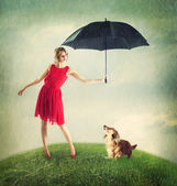 Proteching the Dachshund from the Rain — Stock Photo