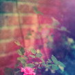 Pink rose in the garden — Stock Photo #64556623