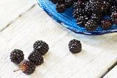Blackberries just picked — Stock Photo