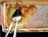 Rough genuine honey — Stock Photo