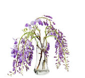 Wisteria branches inside glass vase over white background — Stock Photo